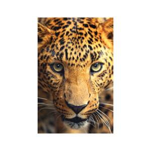 SNAPSHOTZ Cheetah