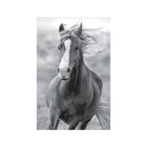SNAPSHOTZ Horse