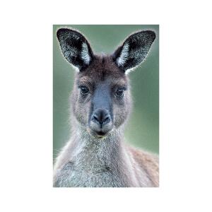 SNAPSHOTZ Kangarooj