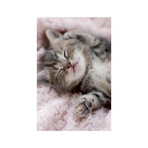 SNAPSHOTZ Kitten