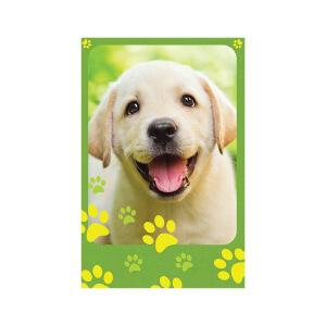 SNAPSHOTZ Labrador Puppy