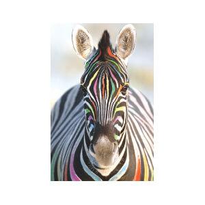 SNAPSHOTZ Zebra