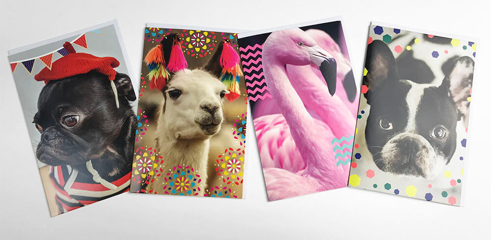 Snapshots 4x Animals Cards Pig, Llama, Flamingo, French Bulldog