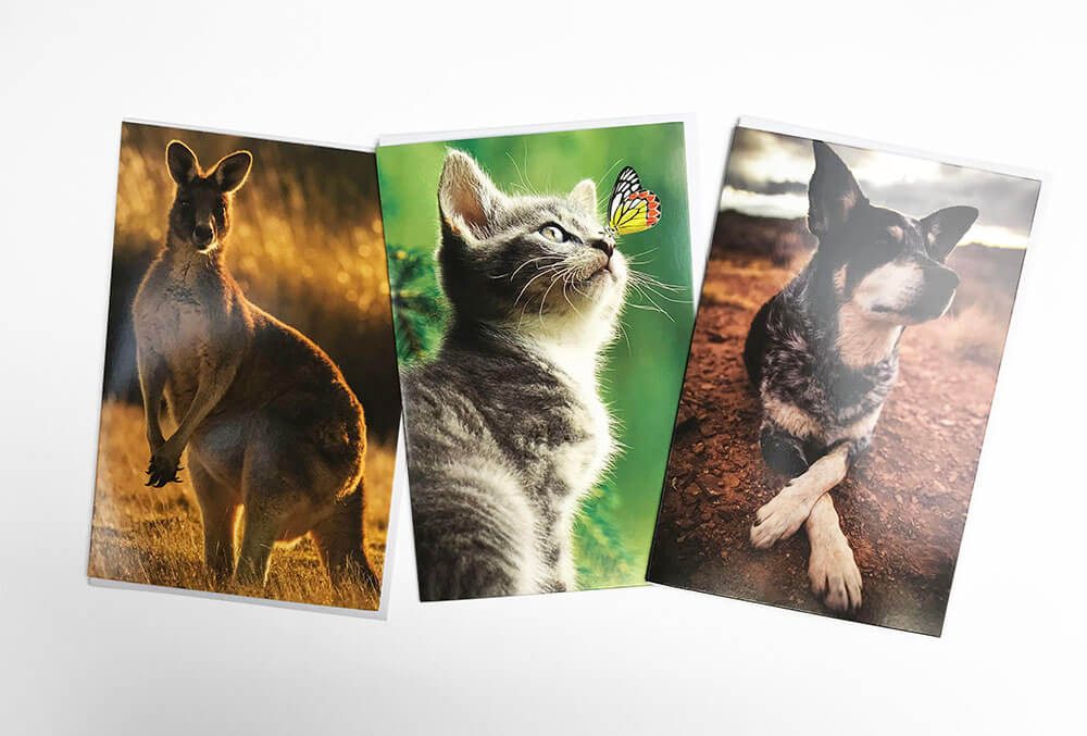 Snapshotz 3 x cards Kangaroo, Kitten, Dog